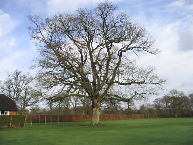 Cricket pitch with large oak tree:: OS grid SU2927 :: Geograph ...