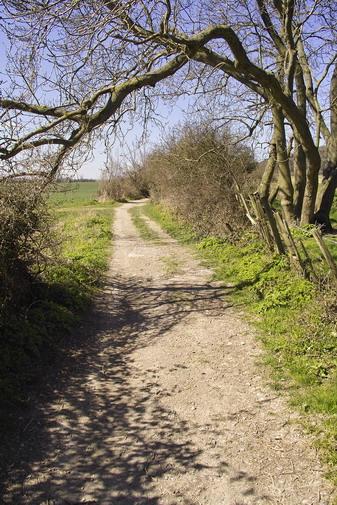 North Downs Way at Wrotham
