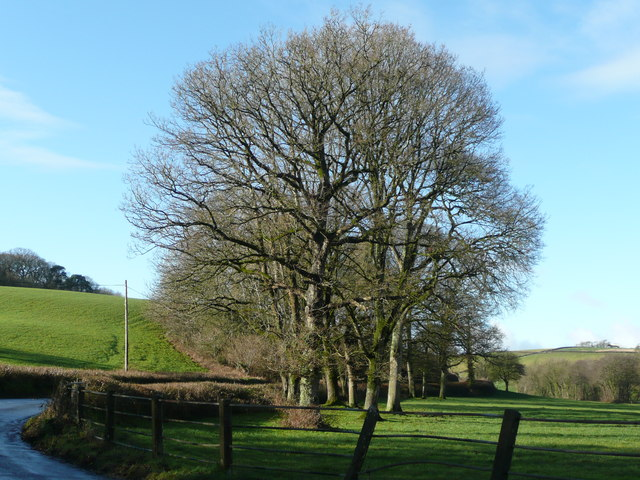 Beeches in the Yeo valley