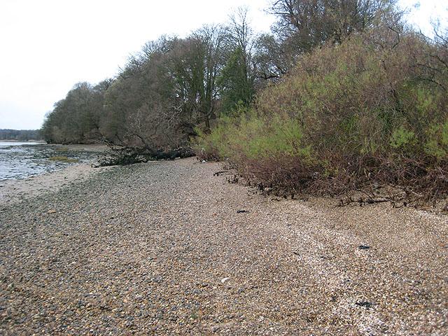 Wooded shoreline near Orwell Park House