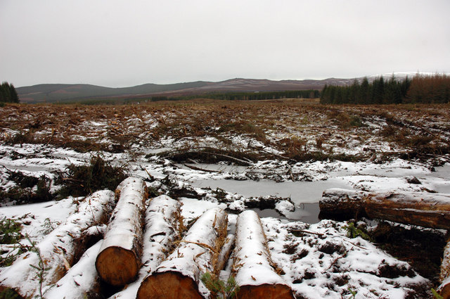 Forest harvesting near Moy