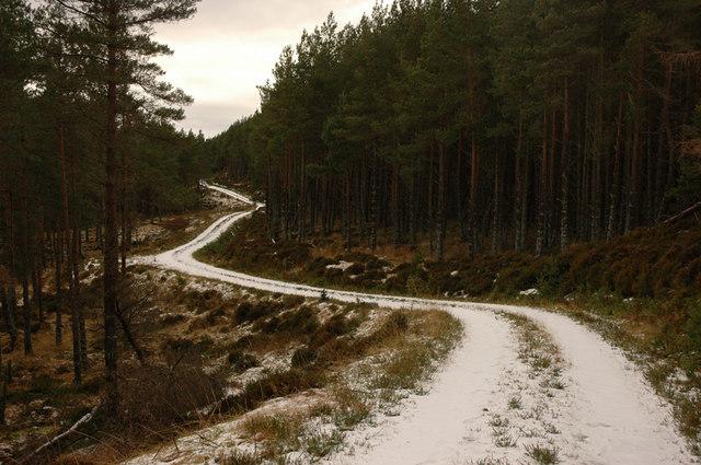 Forest track near Meall Mor