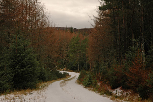 Forest track and view to Meall Mor