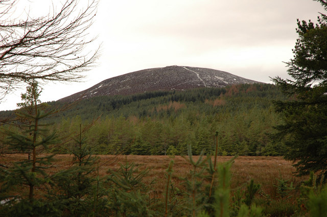 View through the forest to Meall Mor