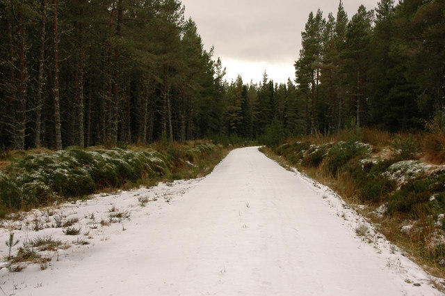 Forest track near Moy