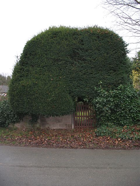Gate in the yew