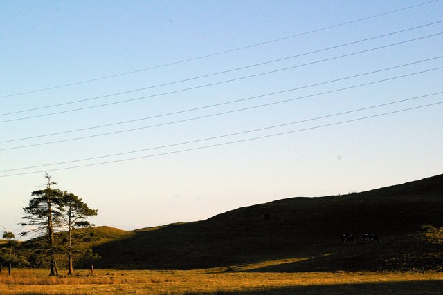 Electricity Wires and Oasis of Trees on Finavon Hill, Angus