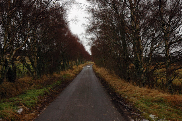 Minor road and birch trees