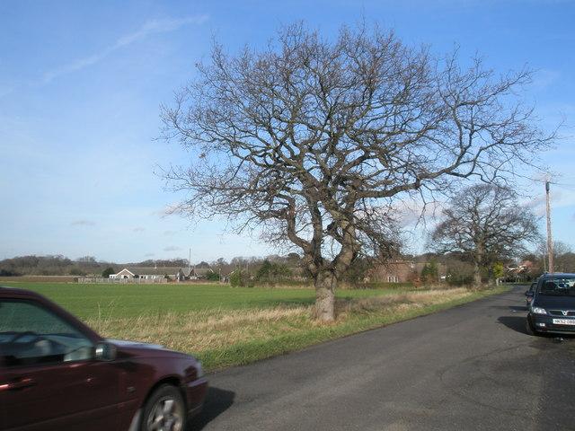 Tree at Bethwines Farm