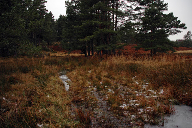 Boggy ground and unnamed stream near Loch Kirkaldy