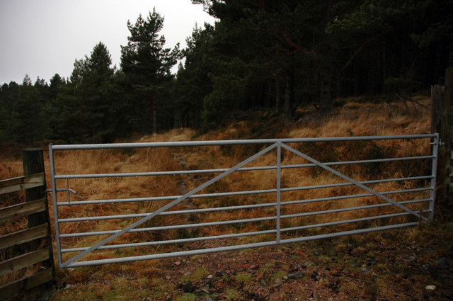 New gate on an old overgrown track