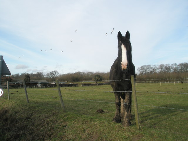 Friendly horse in Clay Lane