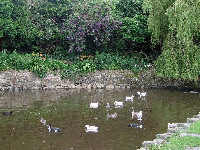 St Dogmael's duck pond