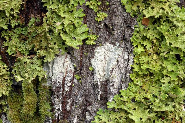 Moss on a tree in Glen Liath