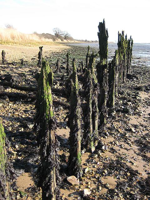 Seaweed-festooned old jetty