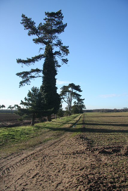 Track and trees at Butley