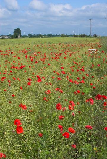 Fields in March
