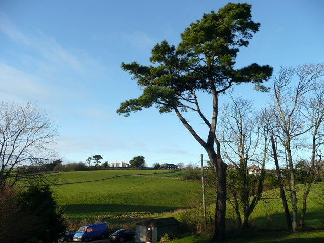 Scots pine and view from Lenwood