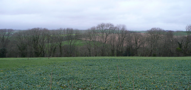 Rape field, woods and countryside beyond