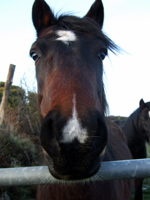 """""""Why the long face?"""""""
