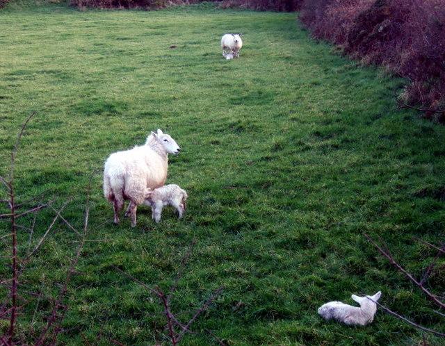New to ewe