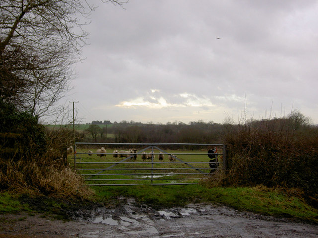 Nosey and very wet sheep