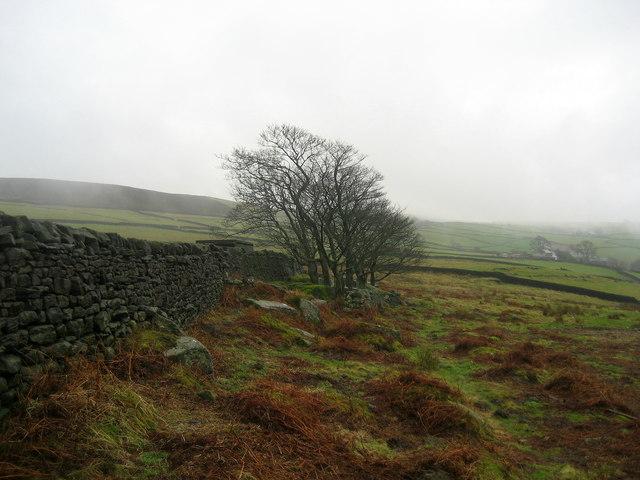Pasture near Valley Farm