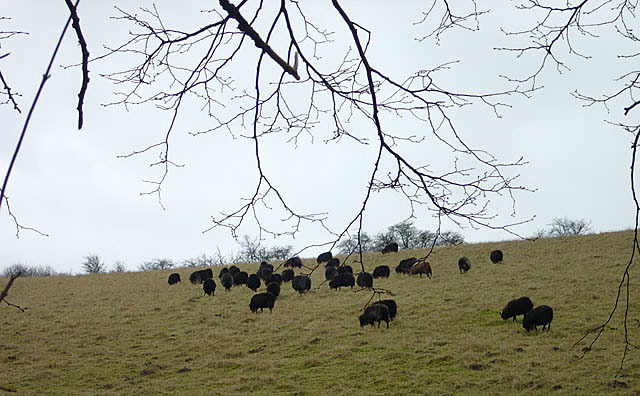 Family of the Black Sheep