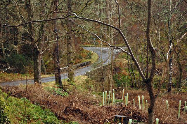 Road, bridge and woodland at Rereach