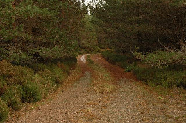 Dark forest track
