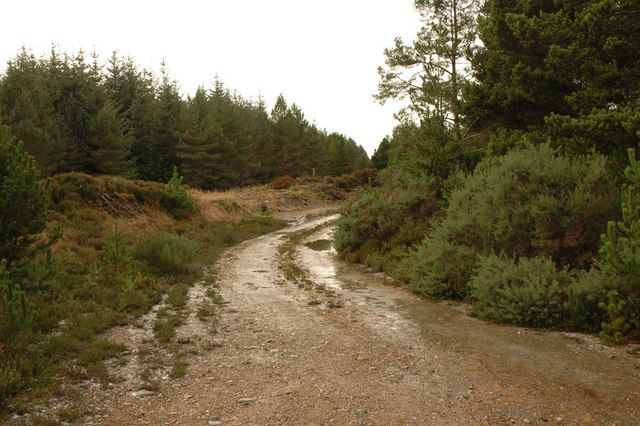 Forest track near Highland Boath