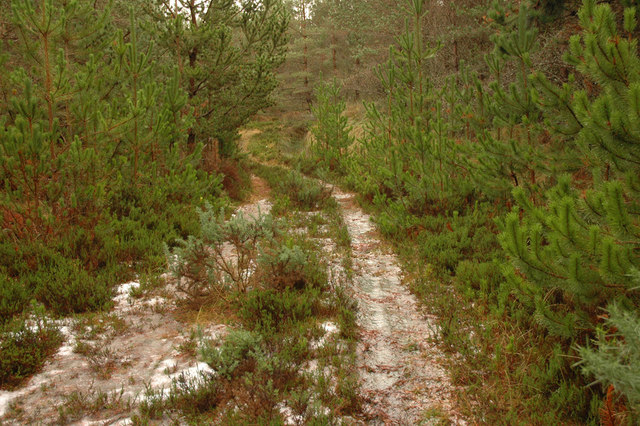 Overgrown forest track