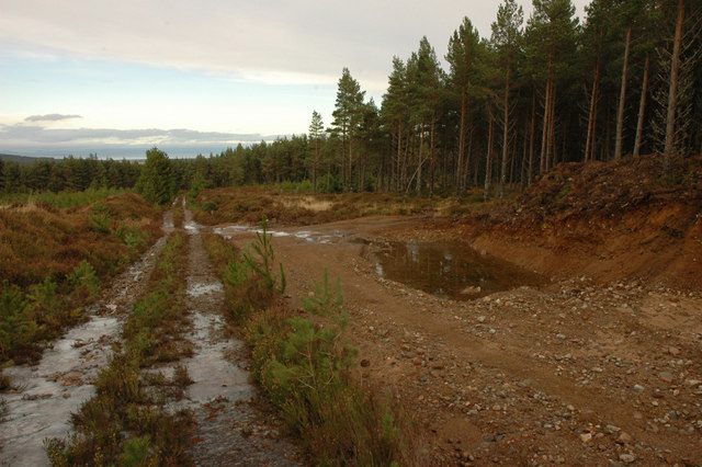 Forest track and gravel pit