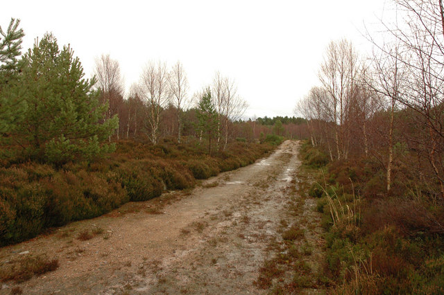 Forest track in Dulsie Wood