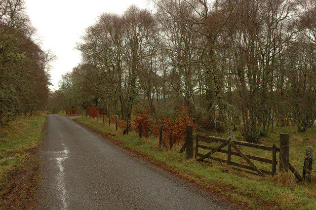 Road, birch trees and gate