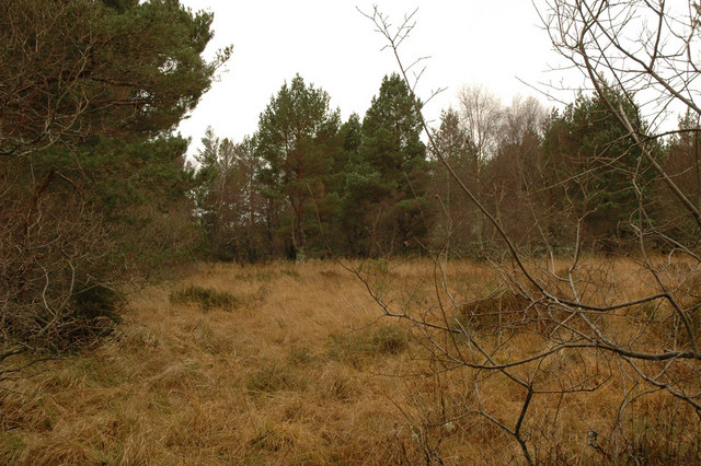 Sparse woodland near Lethen Bar