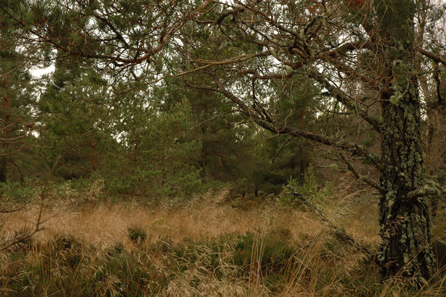 Woodland near Lethen Bar