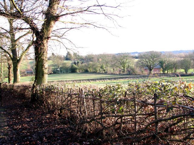 A neatly laid hedge