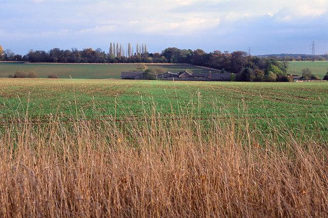 Fields of Rectory Farm