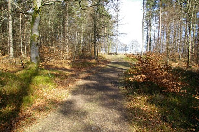 Pathway in Caddam Wood, Kirriemuir