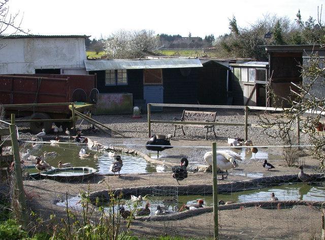 Peacock's Yard, Stanton Mere Way