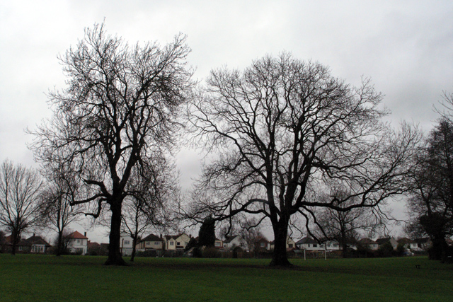 Two Ashes, Cator Lane Recreation Ground, Chilwell