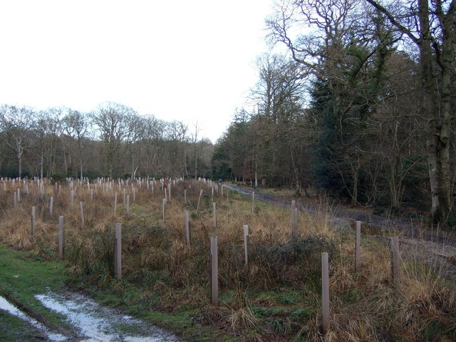 Coopers Wood, New Forest