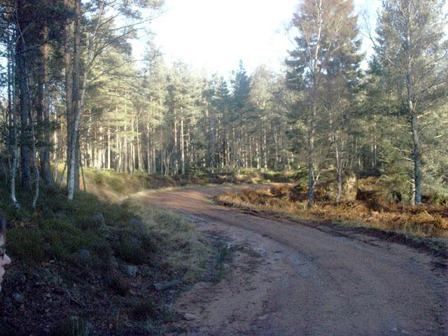 Forestry track near the Backbog burn