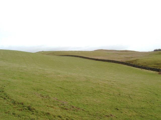 Pasture near Auldgirth