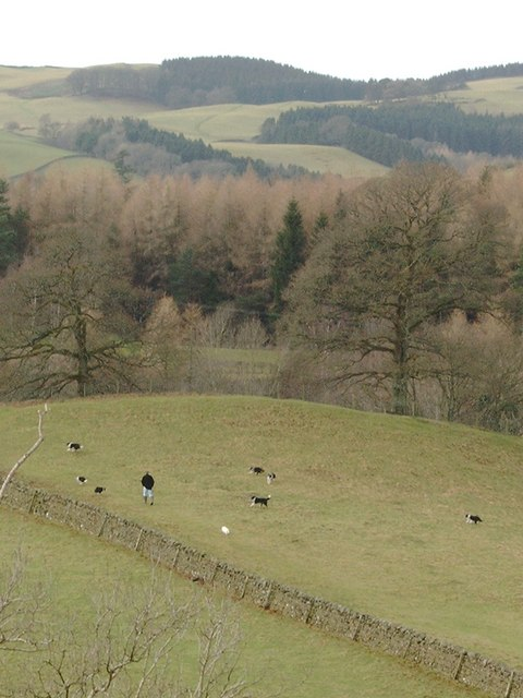 A man and his dogs, near Auldgirth