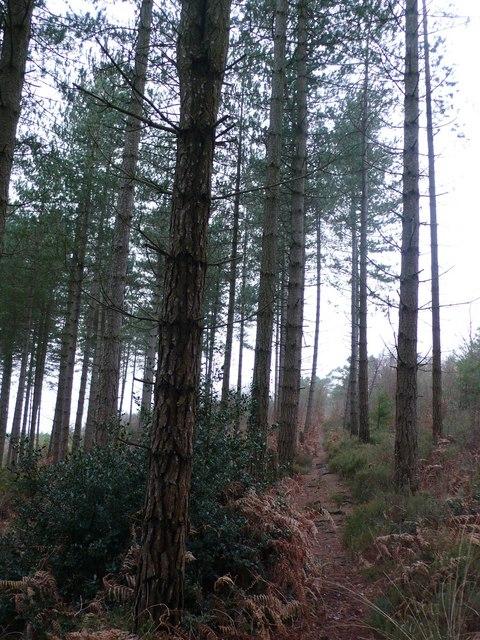 Marl Pits Woods, Affpuddle, Dorset