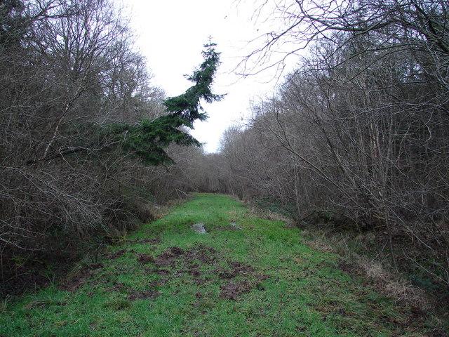 Track Through New Park Wood