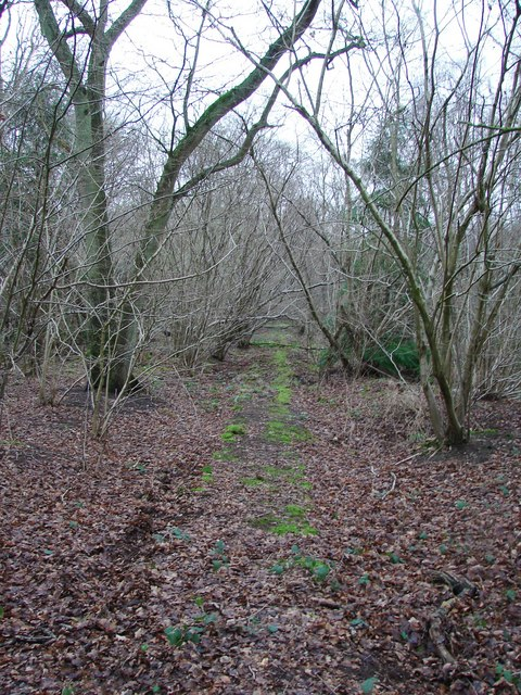 Knowle's Wood
