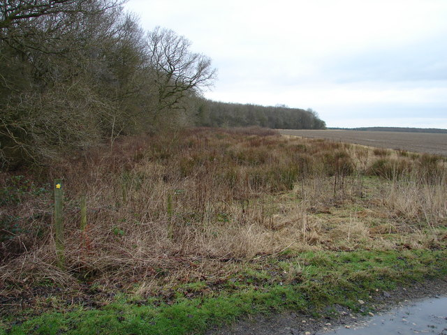 The Edge of Stainfield Wood